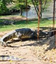 The Million Years Stone Park Crocodile Farm