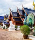 Elephant care Blue Temple tour Chiang Mai