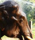 Ran Tong Elephant care full day tour Chiang Mai